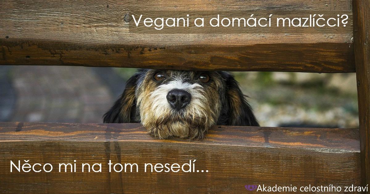 Jste vegani a máte domácího mazlíčka? Trochu divný, ne?