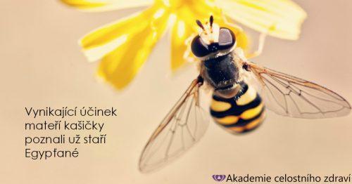 Včelí kašička – nejen pro královnu!